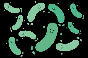 有胞子性乳酸菌